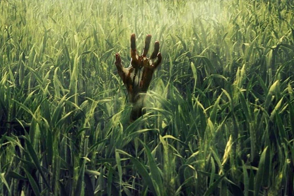 stephen king in tha tall grass horror suspenso niños perdidos