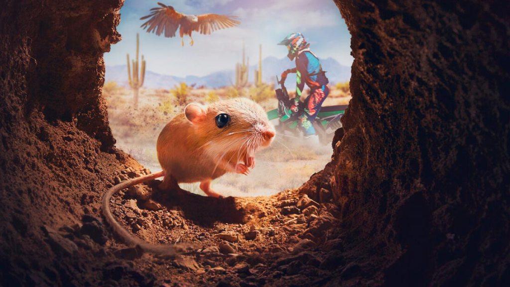 """La vida de las criaturas más pequeñas en """"Criaturitas"""""""